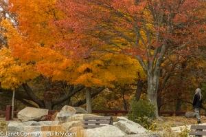 autumn-2-3